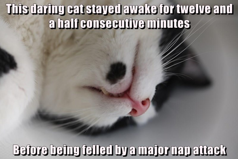 Funny cat meme about a new world record being made for how long a cat was able to stay awake.