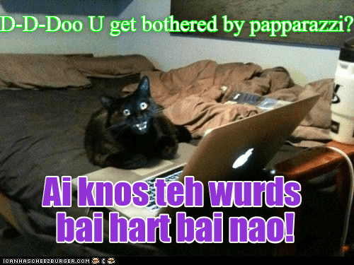 Strange and blurry cat meme about paparazzi and being used to them.