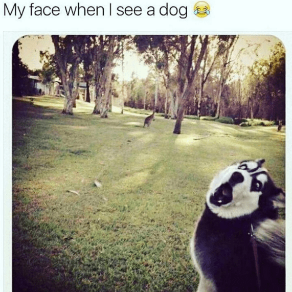 Text - My face when I see a dog
