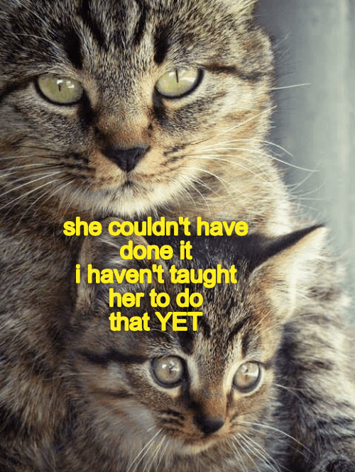 taught cat couldnt yet havent caption - 9024141568