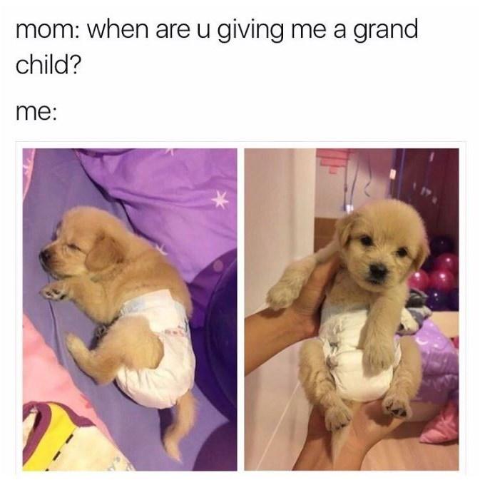 dog as grandchild diaper