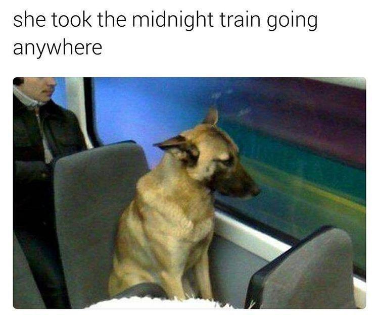 dog riding train journey lyrics