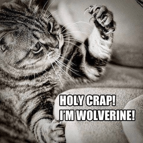 Funny picture of a cat looking at his claws and declaring himself wolverine.