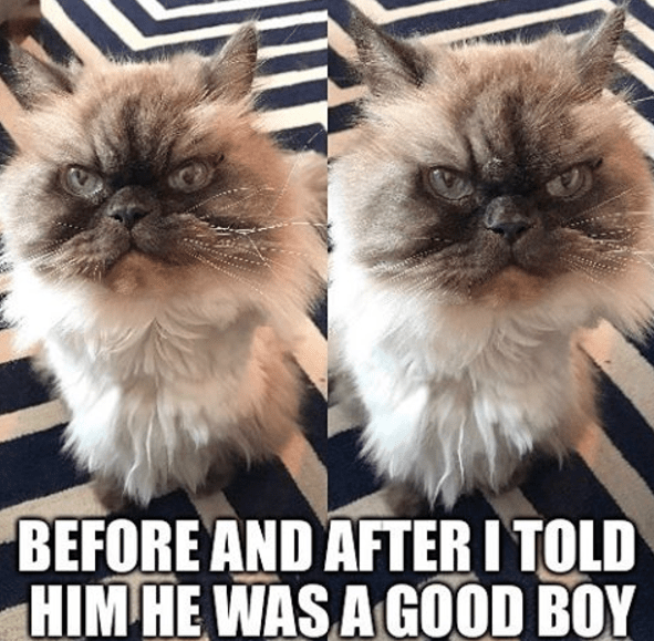 Before and after pics of being told he is a good boy to a cat that clearly doesn't care or put any value in your approval.