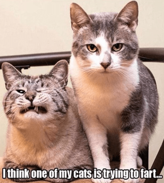 Funny meme of 2 cats and one seriously looks like he is trying to fart.