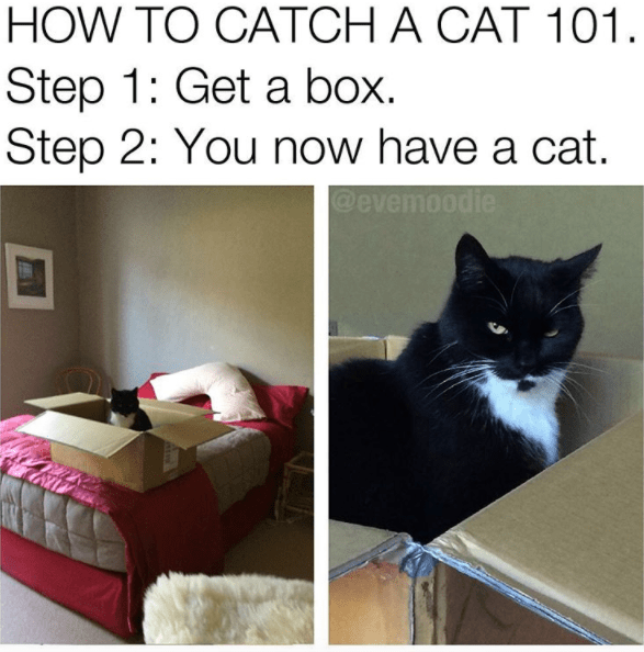 Cat meme of how to catch a cat using a box.