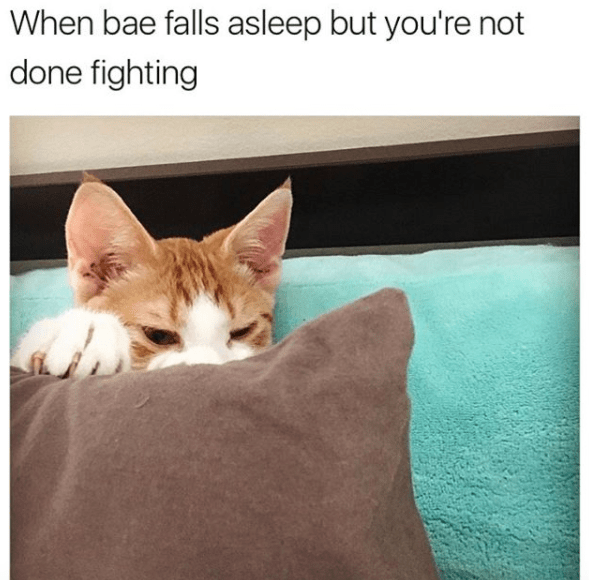 Revenge cat meme about when he falls asleep but you are not done fighting.
