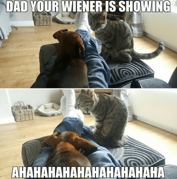 Funny cat pun about a wiener dog.