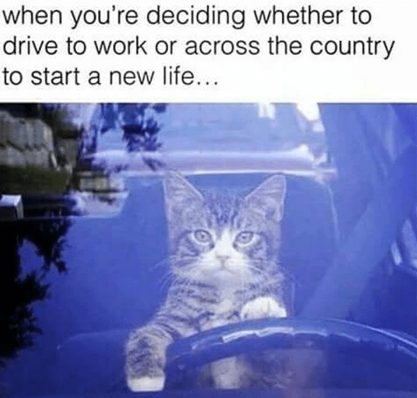 Funny meme of a cat driving a car captioned that he is off to start a new life.