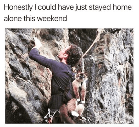 Cat tied to someone's back as he climbs a rock cliff commenting how he would have been fine just staying at home.