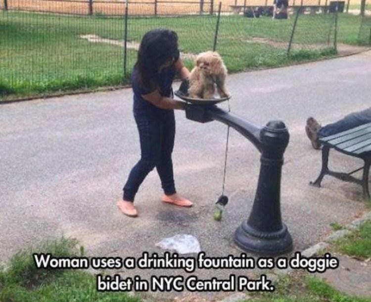 FAIL - Companion dog - Woman uses a driking fountain as a doggie bidet in NYC Centrdl Park