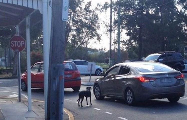 FAIL - Mid-size car - STOP