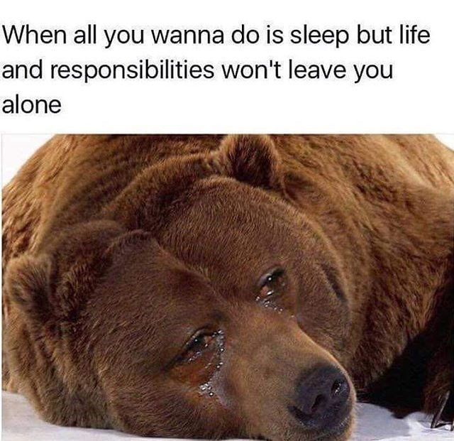 bear crying because responsibilities