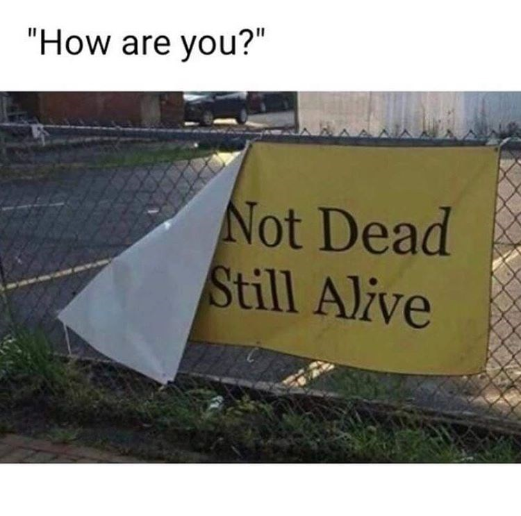 how are you? not dead still alive
