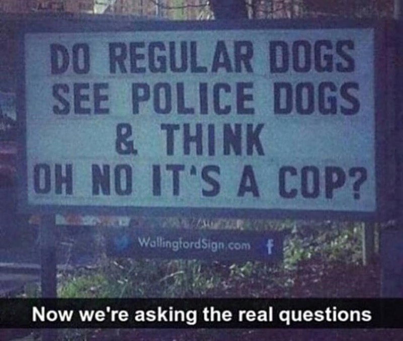 are regular dogs intimidated by police dogs?