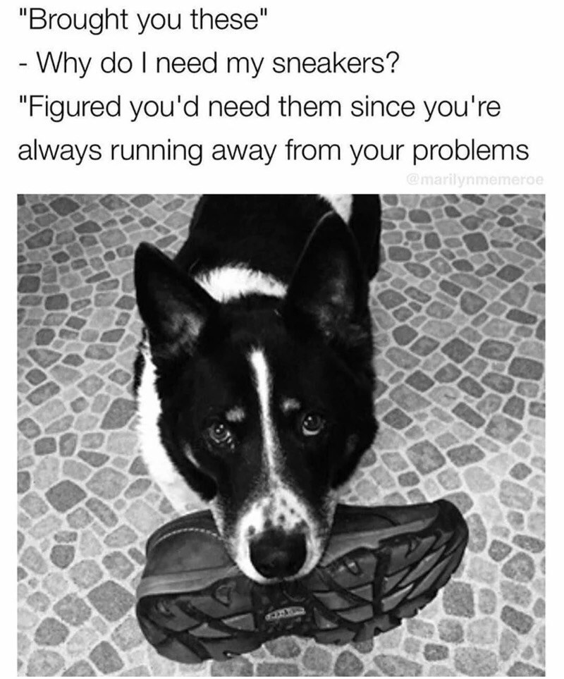dog bringing owner shoes running away from problems