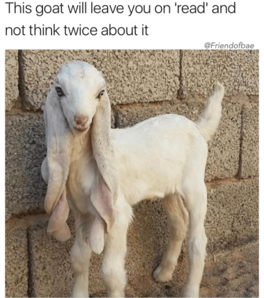 Goats - This goat will leave you on 'read' and not think twice about @Friendofbae