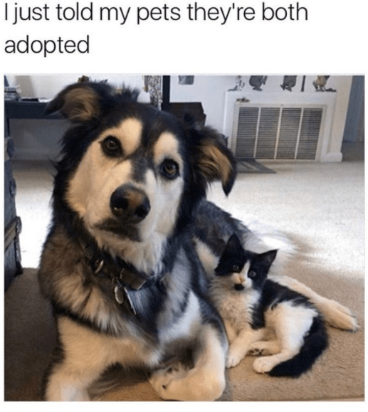 Dog - I just told my pets they're both adopted