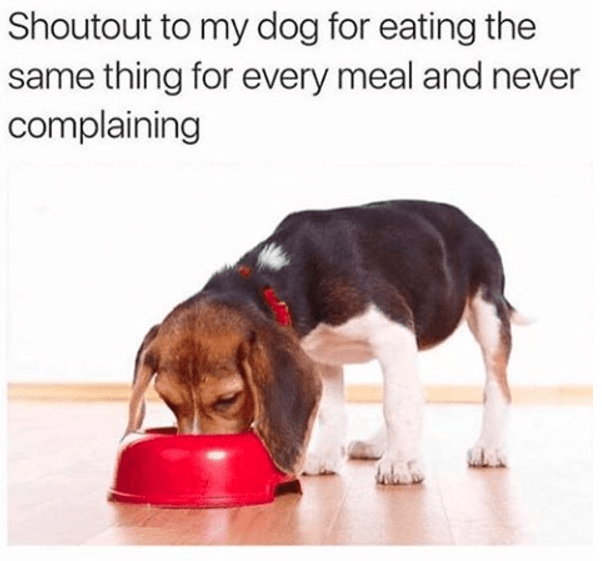 Dog - Shoutout to my dog for eating the same thing for every meal and never complaining