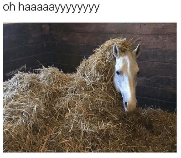 Horse - oh haaaaayyyyУУУУ @dabmoms