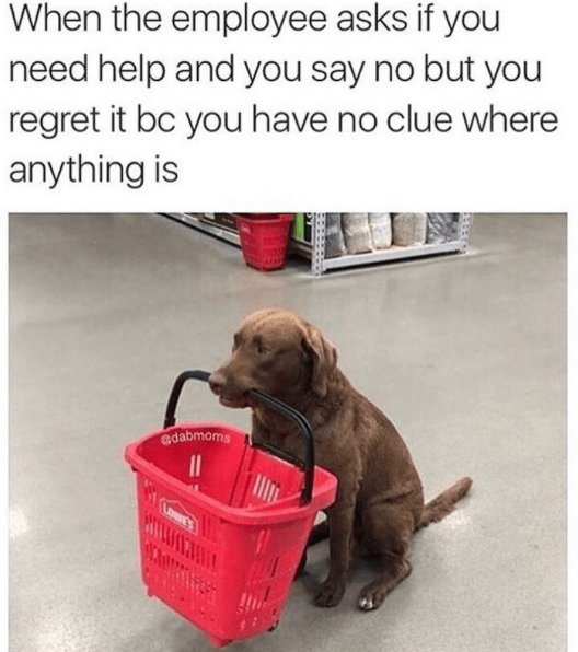 Dog - When the employee asks if you need help and you say no but you regret it bc you have no clue where anything is adabmoms HTLHA