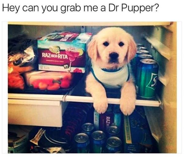 Puppy - Hey can you grab me a Dr Pupper? RAZ SER RITA JS RAZ AT
