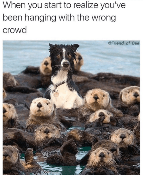 Sea otter - When you start to realize you've been hanging with the wrong crowd @Friend of Bae