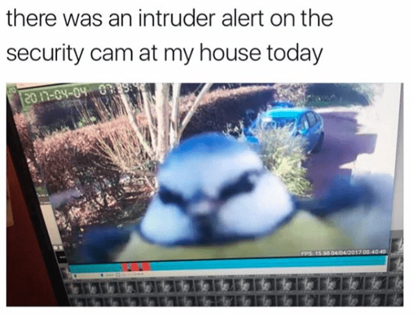 Text - there was an intruder alert on the security cam at my house today 20 n-04-04 0 FPS 15 95 04/04/2017 08 40 40