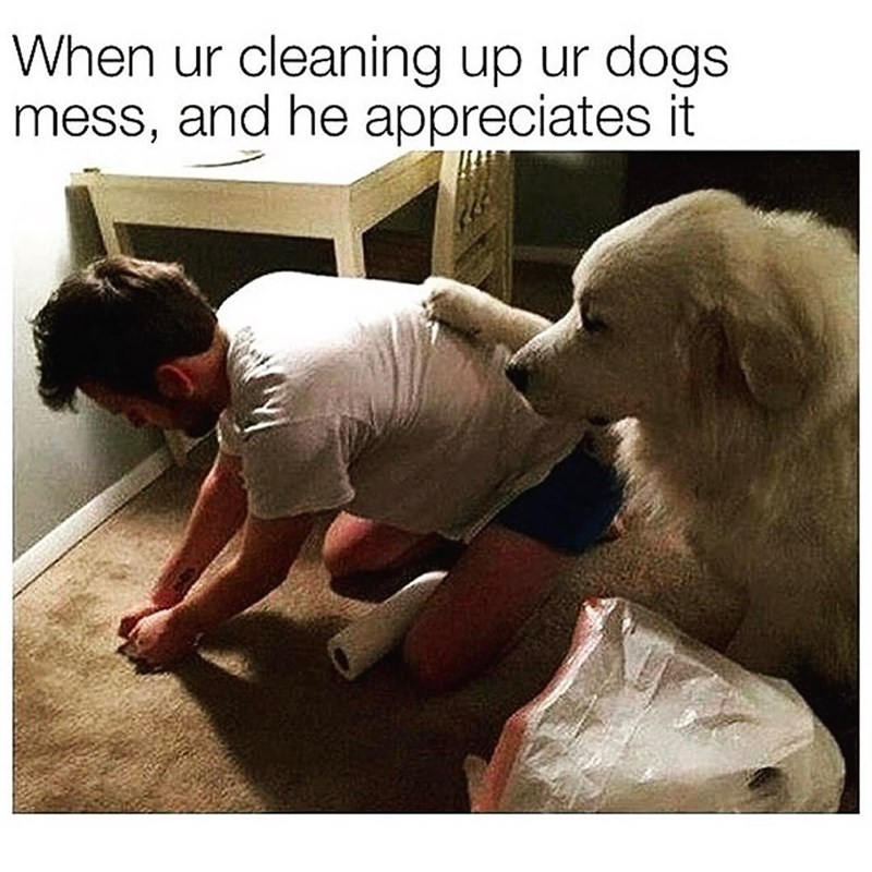 dog appreciating human for cleaning up mess