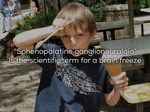 Table - Sphenopalatine ganglioneuralgia is the scientificterm for a brain freeze