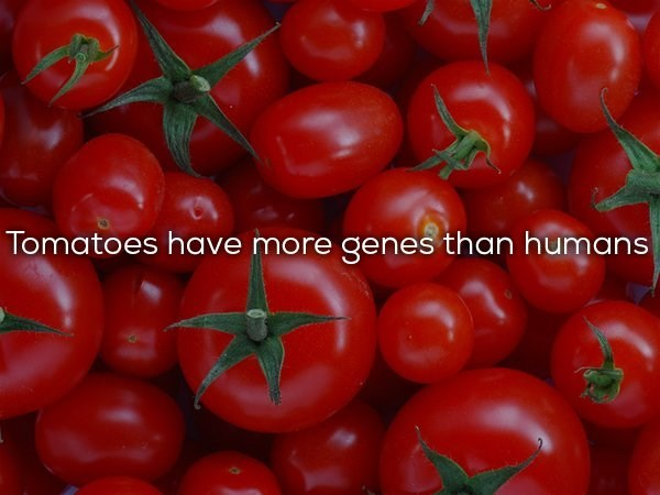 Natural foods - Tomatoes have more genes than humans