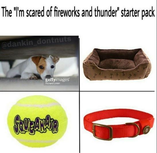 dog starter pack scared of thunder