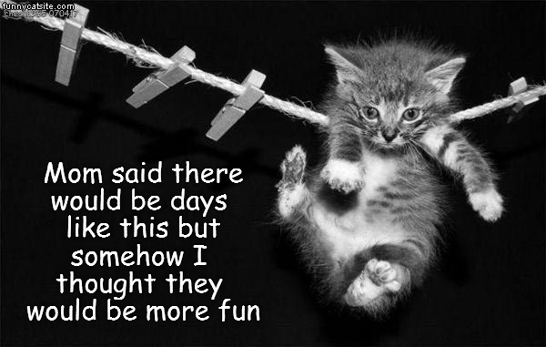 caption days kitten fun mom said thought - 9025159936