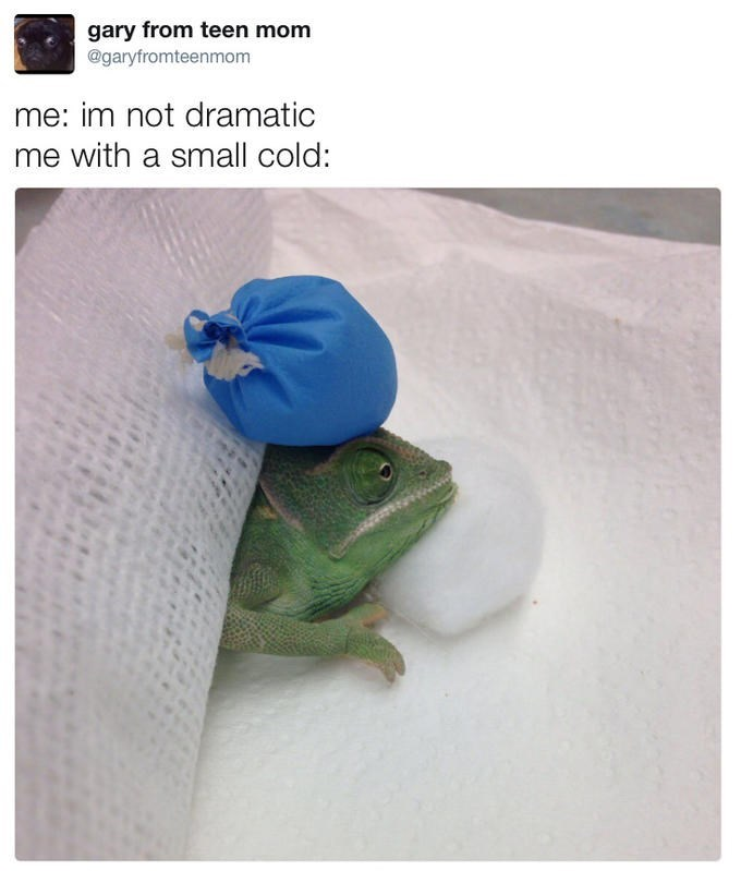 me also me meme of lizard with a small cold putting large bag of ice on his head dramatically