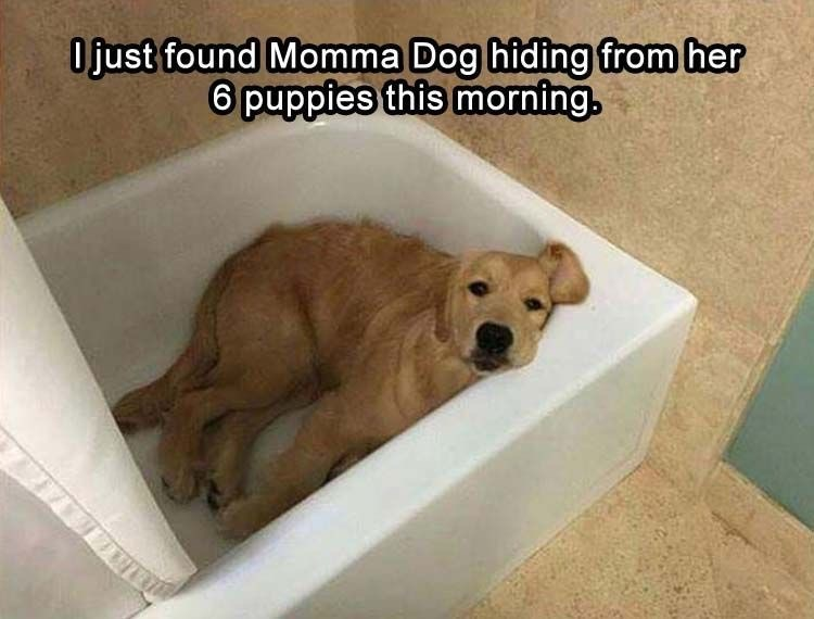 Dog breed - Ojust found Momma Dog hiding from her 6 puppies this morning.