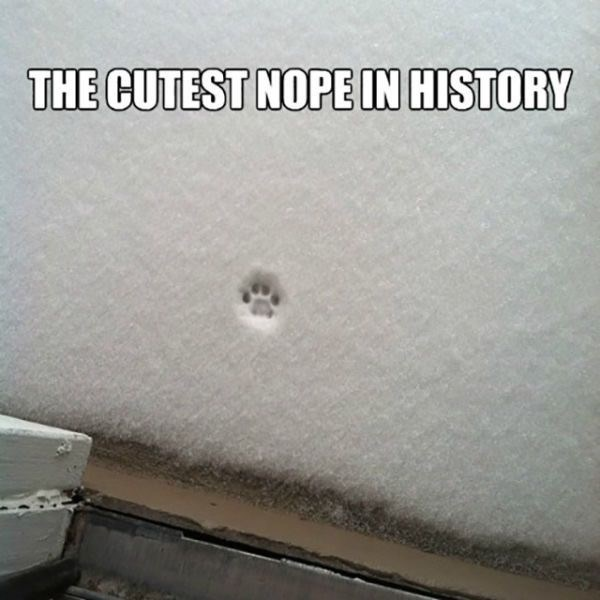 Ceiling - THE CUTEST NOPE IN HISTORY