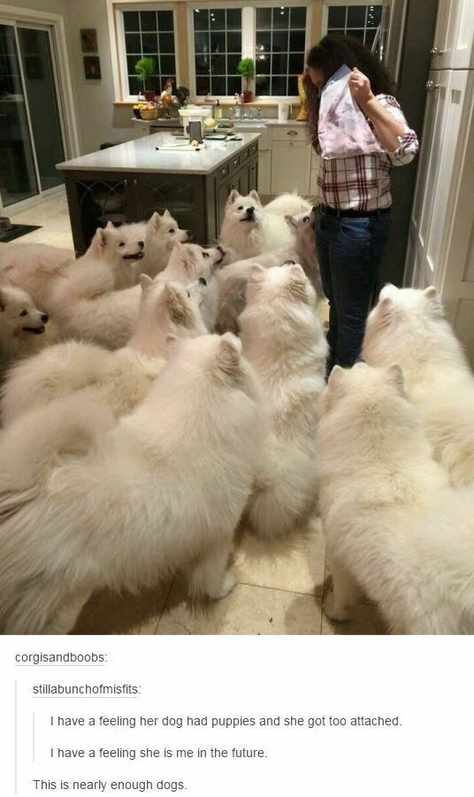 Fur - corgisandboobs: stillabunchofmisfits: I have a feeling her dog had puppies and she got too attached. I have a feeling she is me in the future. This is nearly enough dogs