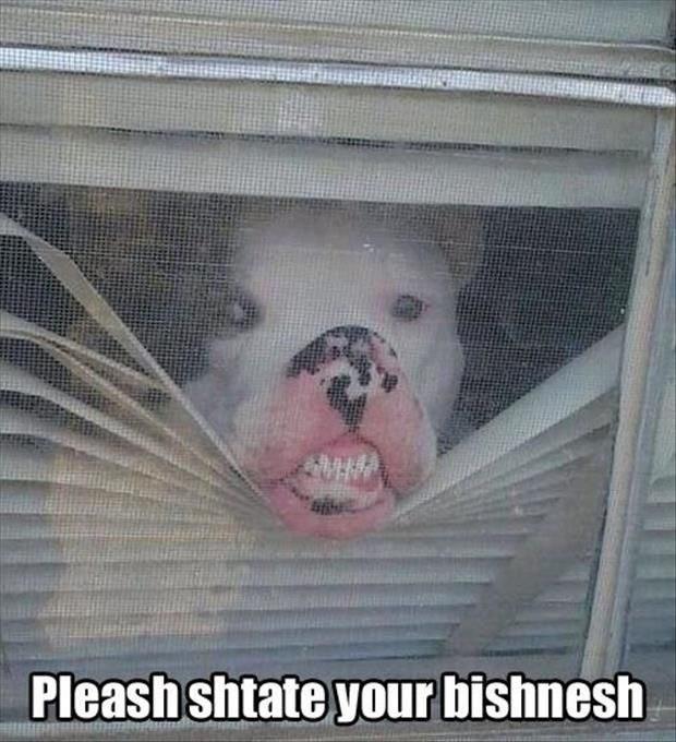 Nose - Pleash shtate your bishnesh