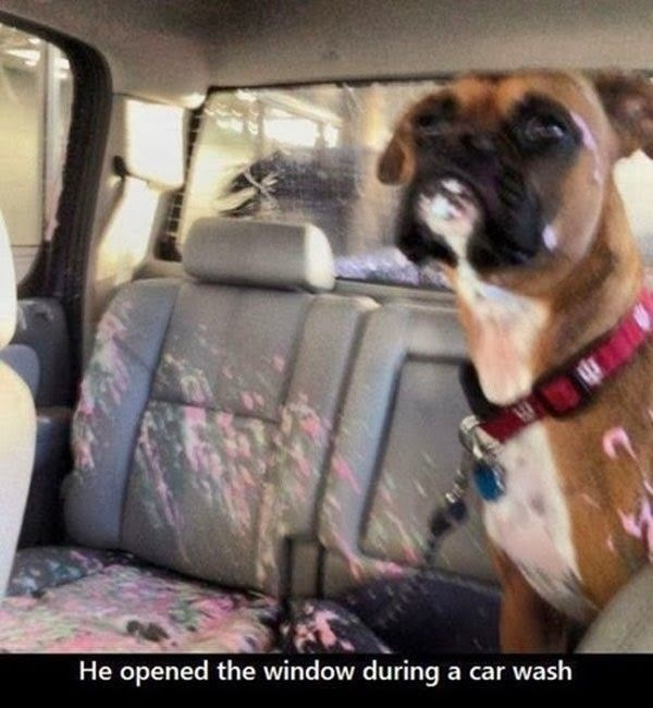 Dog - He opened the window during a car wash