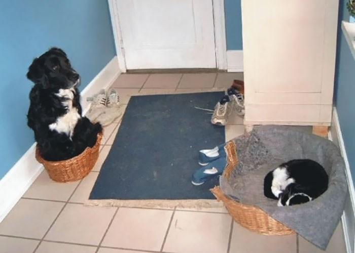 cat stole dog's bed - Floor