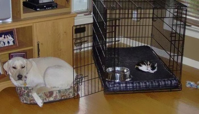 cat stole dog's bed - Cage