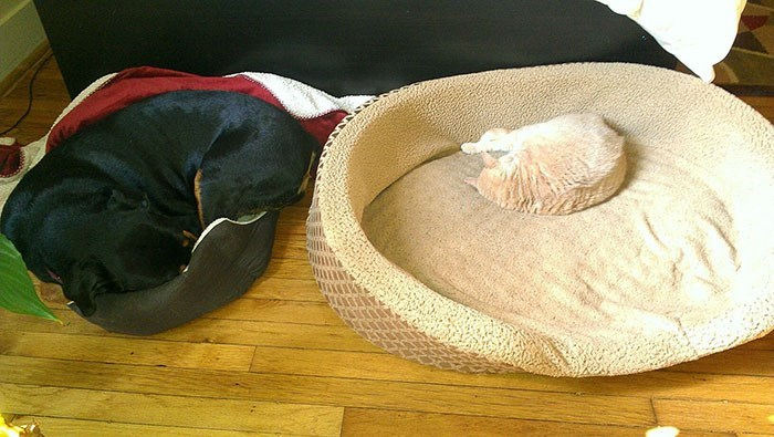 cat stole dog's bed - Cat bed
