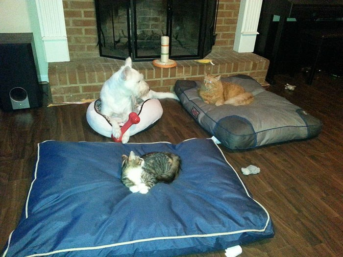 cat stole dog's bed - Room