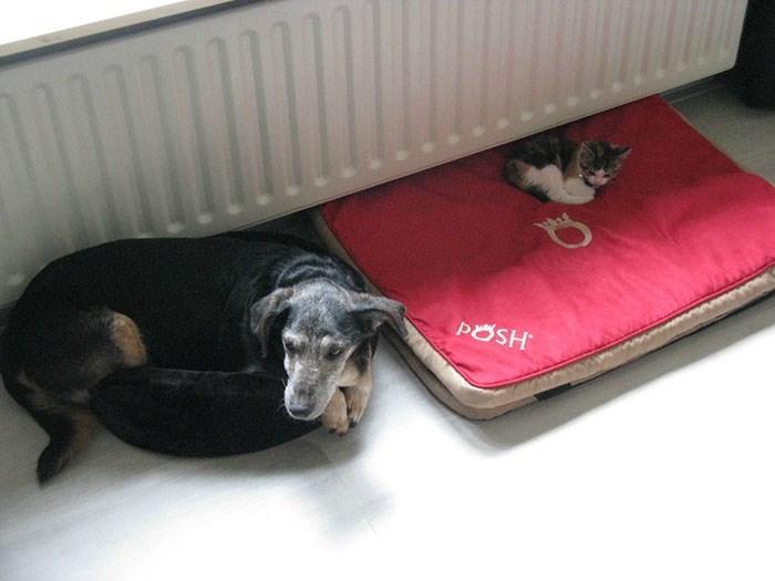 cat stole dog's bed - Dog - POSH