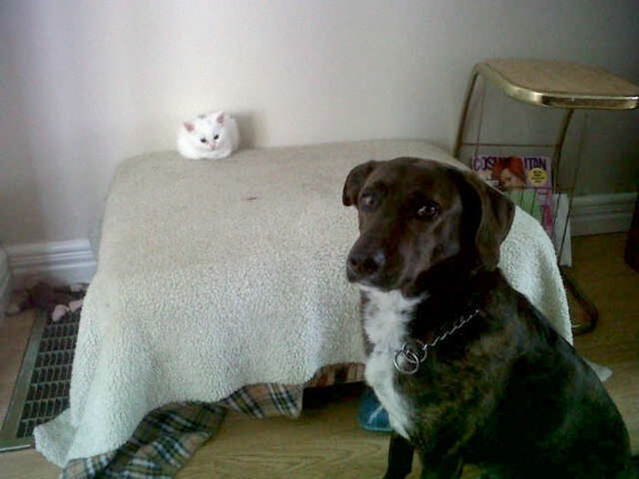 cat stole dog's bed - Dog - ACOS TAN