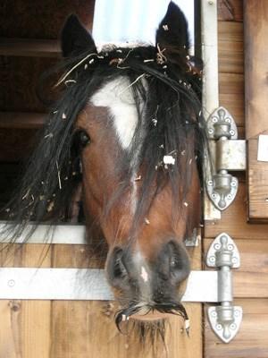 Mustache Horse
