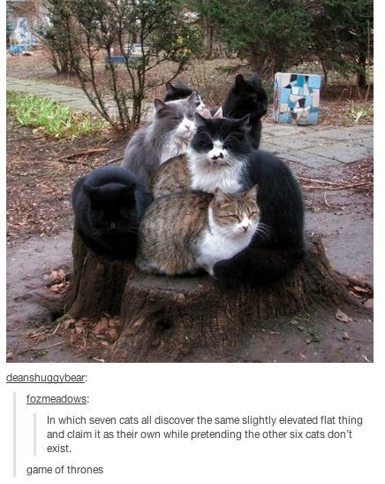 Photo caption - deanshuggybear: fozmeadows In which seven cats all discover the same slightly elevated flat thing and claim it as their own while pretending the other six cats don't exist game of thrones