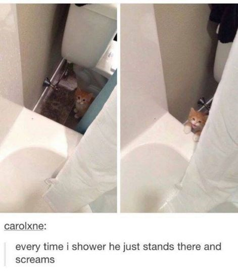 Toilet seat - carolxne: every time i shower he just stands there and screams