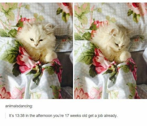 Cat - animalsdancing: It's 13:38 in the afternoon you're 17 weeks old get a job already.