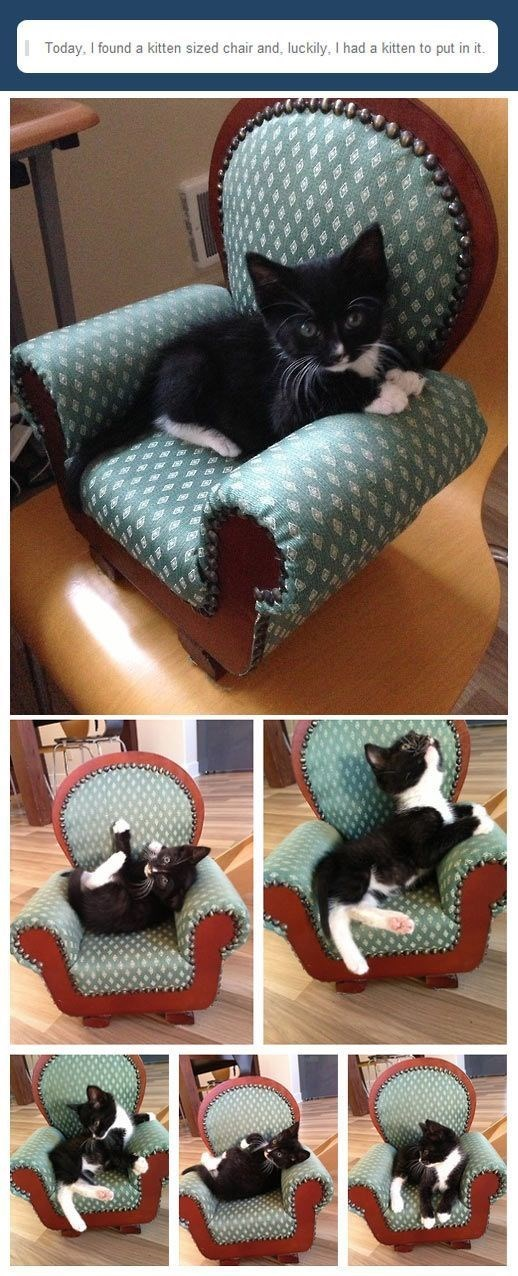 Cat - Today, I found a kitten sized chair and, luckily, I had a kitten to put in it.